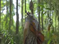 Irish Stew of Sindidun - One Way Ticket - Snimanje spota